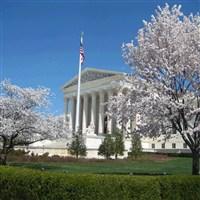 Cherry Blossom Parade & Festival Washington, D.C.