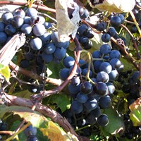 Wine, Chocolate and Apples by Lenzner Tours