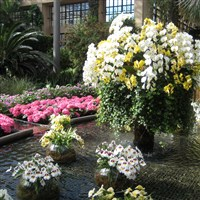Philadelphia Flower Show by Lenzner Tours