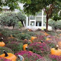 Franklin Park - Pizza & Pumpkin Walk by LFL Toledo