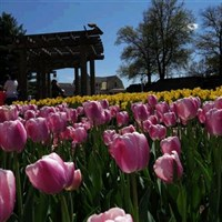 Spring in Bloom at Oglebay Resort by Lenzner Tours